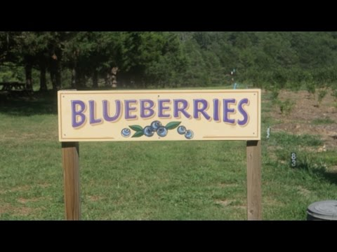 FINALLY WENT TO A BERRY FARM!!!