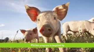 Phileo Lesaffre Кормовые добавки для животноводства
