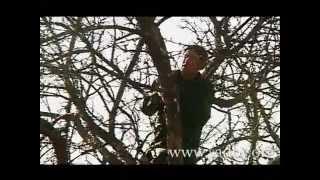 Омолаживающая обрезка старых деревьев(Как правильно обрезать старое дерево, чтобы продлить ему жизнь и улучшить урожай. Заказать видеокурс можно..., 2013-03-04T13:53:35.000Z)