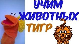 Учим Животных. Тигр. Развивающий мультик. Мультик. Детский мультфильм