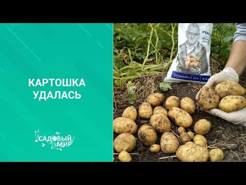 Вопрос: Когда в Приморском крае садить в 2020 году ранний картофель?