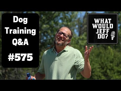 dog-training---stop-dog-fights---dog-jumping---what-would-jeff-do?-q&a-ep.575-(2019)