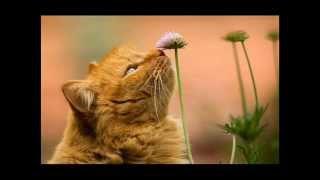 Рыжая кошка!!
