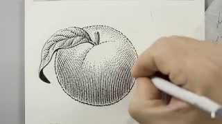Scratchboard Illustration of a Peach for Jam Label