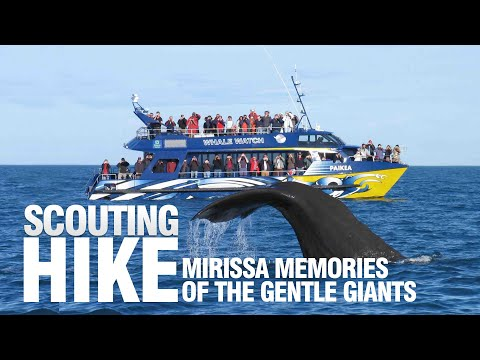 Mirissa whale Watching Boat Tours