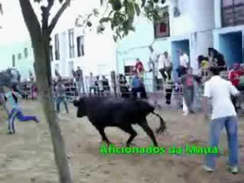 SARILHOS PEQUENOS 2009 - LARGADA DE TOIROS