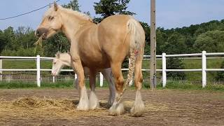 Our lovely palomino colt