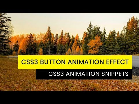 CSS3 Button hover Effect | Tutorial for Beginners | CSS3 Animation Snippets