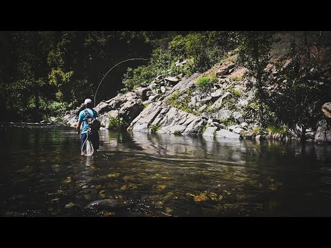 Fly Fishing The Upper Sacramento For Trout