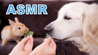 ASMR Funny Dog and Cute Rabbit Eat Together