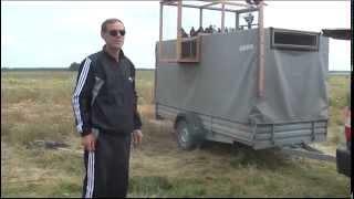 Pigeons Serpasto and Nikolaev  in the field / Серпастые и Николаевские голуби в поле