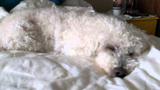 Dog snore sounds like a fart