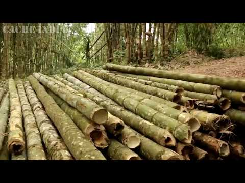BAMBOO - THE GAME CHANGER FOR NORTH EAST INDIA