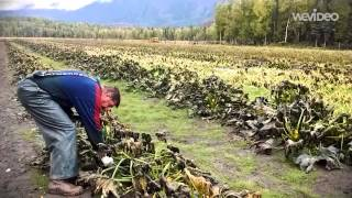 Alaskan Farmer    Remple Farms