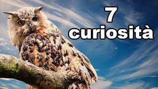 7 Curiosità Sui Gufi