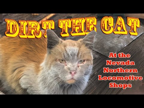 The Worlds Most Famous Cat.- Dirt the Cat at the Nevada Northern ...