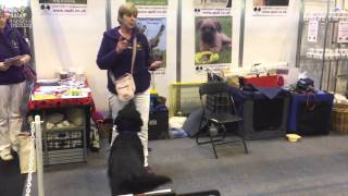 Flyball Box Demo