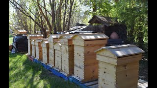Warre Langstroth Hybrid Hive (Beecentric Hive)