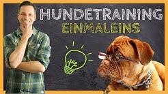 HUNDETRAINING Einmaleins | Grundlagen für eine ERFOLGREICHE Hundeerziehung