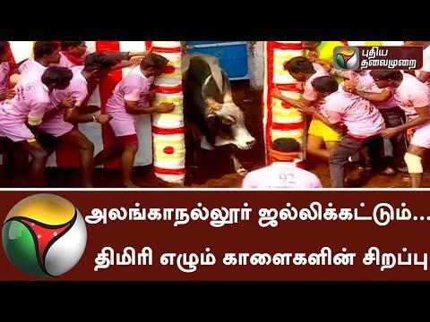 Live: Madurai Alanganallur Jallikattu event & its Importance   #Alanganallur  #Jallikattu2018