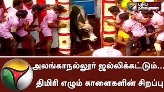Live: Madurai Alanganallur Jallikattu event & its Importance | #Alanganallur  #Jallikattu2018