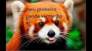 meu primeiro panda vermelho aj