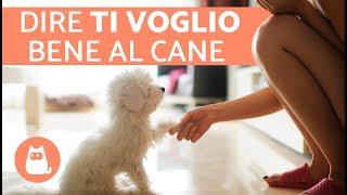 7 MODI per dimostrare al cane che lo ami ❤️🐕
