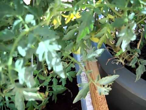 Modular Gardening Center   Tucson Arizona