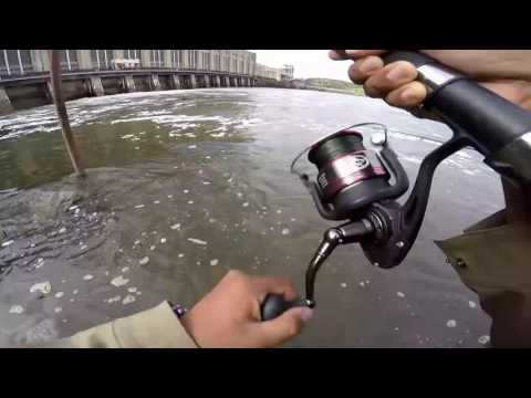 Striped Bass Fishing At The Conowingo Dam, Day 2