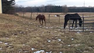 Horses Graze 4 (1/9/2018)