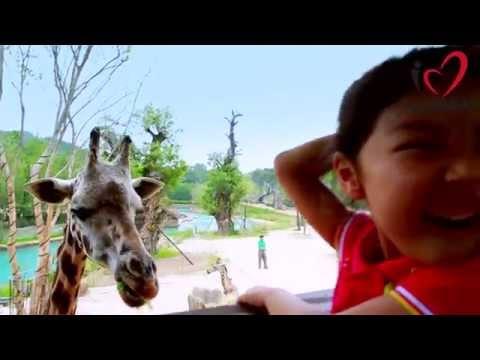 Everland - The Lost Valley Safari Adventure!