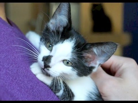 A Kitten's New Forever Home