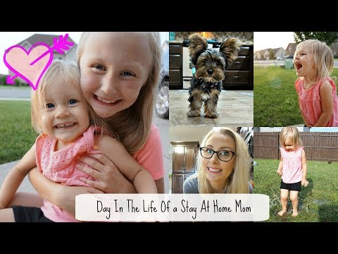 DITL   Stay at Home Mom   New Glasses & Puppy Sitting!!- Mini Grocery Haul-Keep Calm and Clean