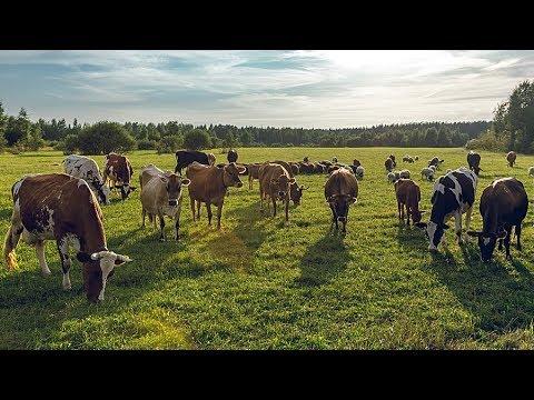 Домашняя ферма Гжельское Подворье