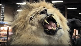 BLOOD LIONS OFFICIAL TRAILER 2015