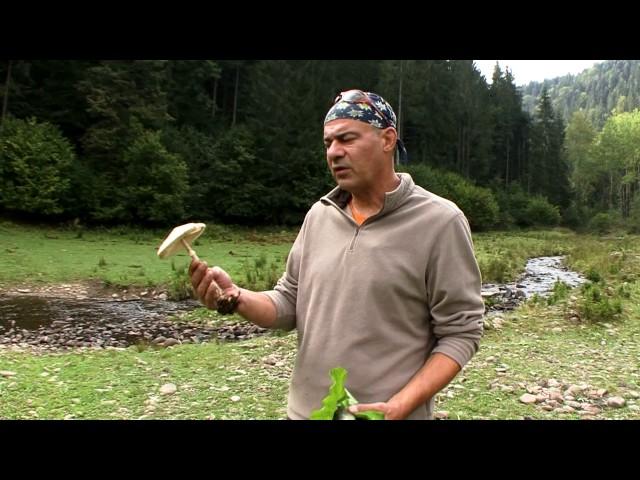 Natură şi aventură - Mâncările naturii