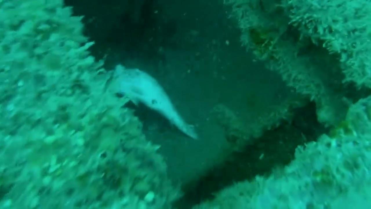 Gulf shores scuba diving