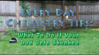 What to do if your dog gets skunked - Everyday Chemistry