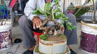 Làm và gl mai bonsai phối tượng mini giá 3.5tr (0383938201)