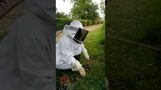 miel abeille essaimage fleuries prairies sauvages