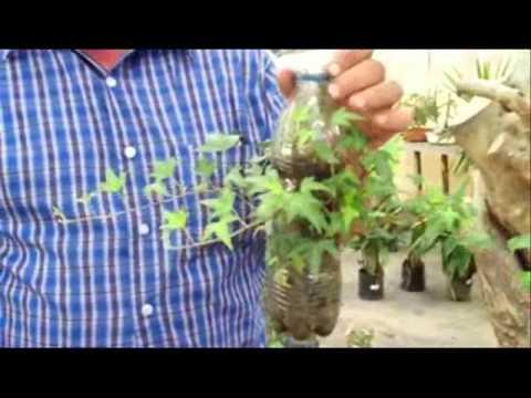 C mo crear un muro verde youtube for Jardines verdes