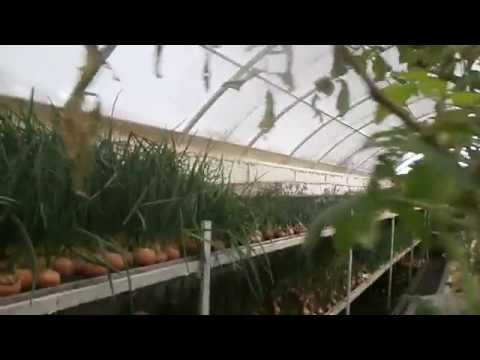 видео: Зимняя теплица Бийск