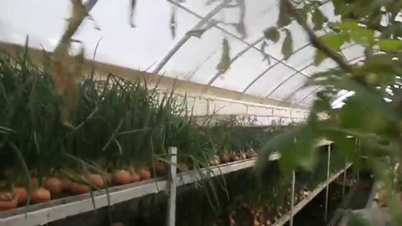Выращивание цветов в теплице как бизнес: на продажу, в 61