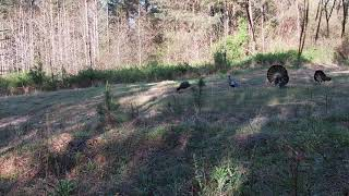 2021 Turkey Hunting