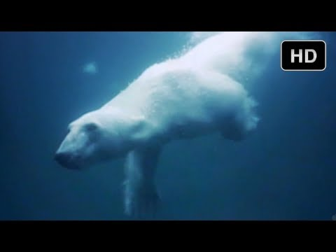 Underwater Adventure in the Arctic Ocean - The Extremes of IMAX 3D Movie-Making