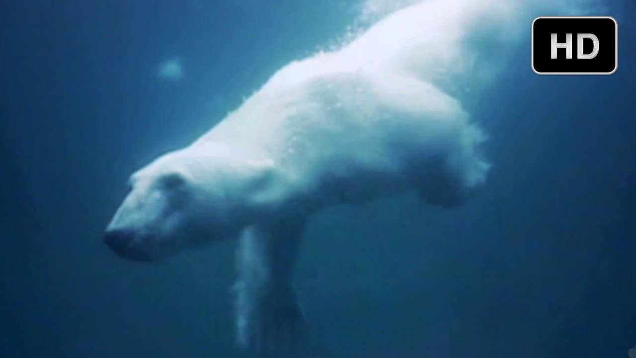 Underwater Adventure in the Arctic Ocean - The Extremes of IMAX 3D ...