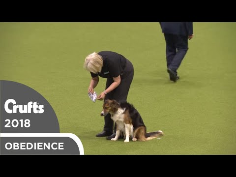 Inter-Regional Obedience - Class C Scents - Part 5 | Crufts 2018