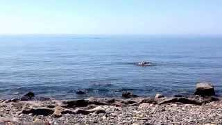 2014, Чёрное море, Бетта, Дикий пляж(, 2014-07-01T18:57:34.000Z)