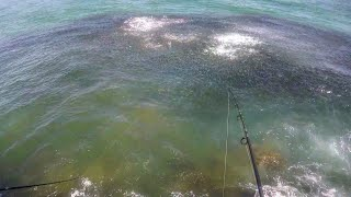 This Should be Called Catching, NOT Fishing - Epic MULLET RUN Migration Action