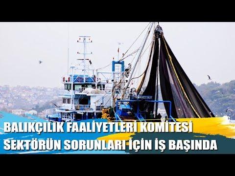 Balıkçılık Faaliyetleri Komitesi, Sektörün Sorunları İçin İş Başında